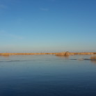 Neusiedler See im Winter